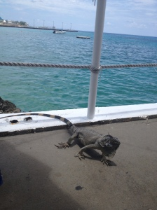 Iguana friend at Rackums